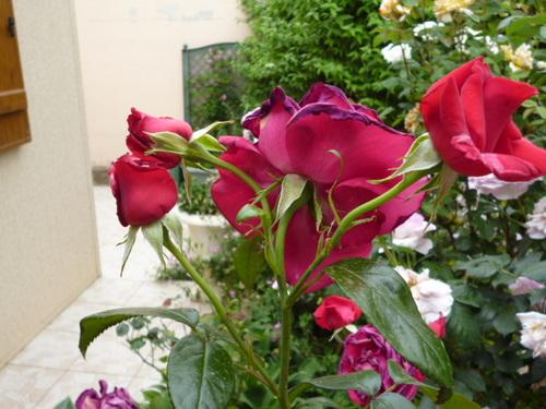 Encore quelques fleurs