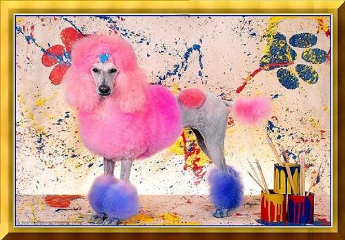 Fashion Canine