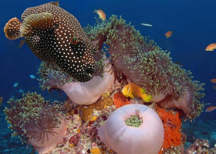 Images du monde : Fonds marins