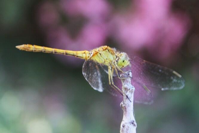 Libellule & papillon