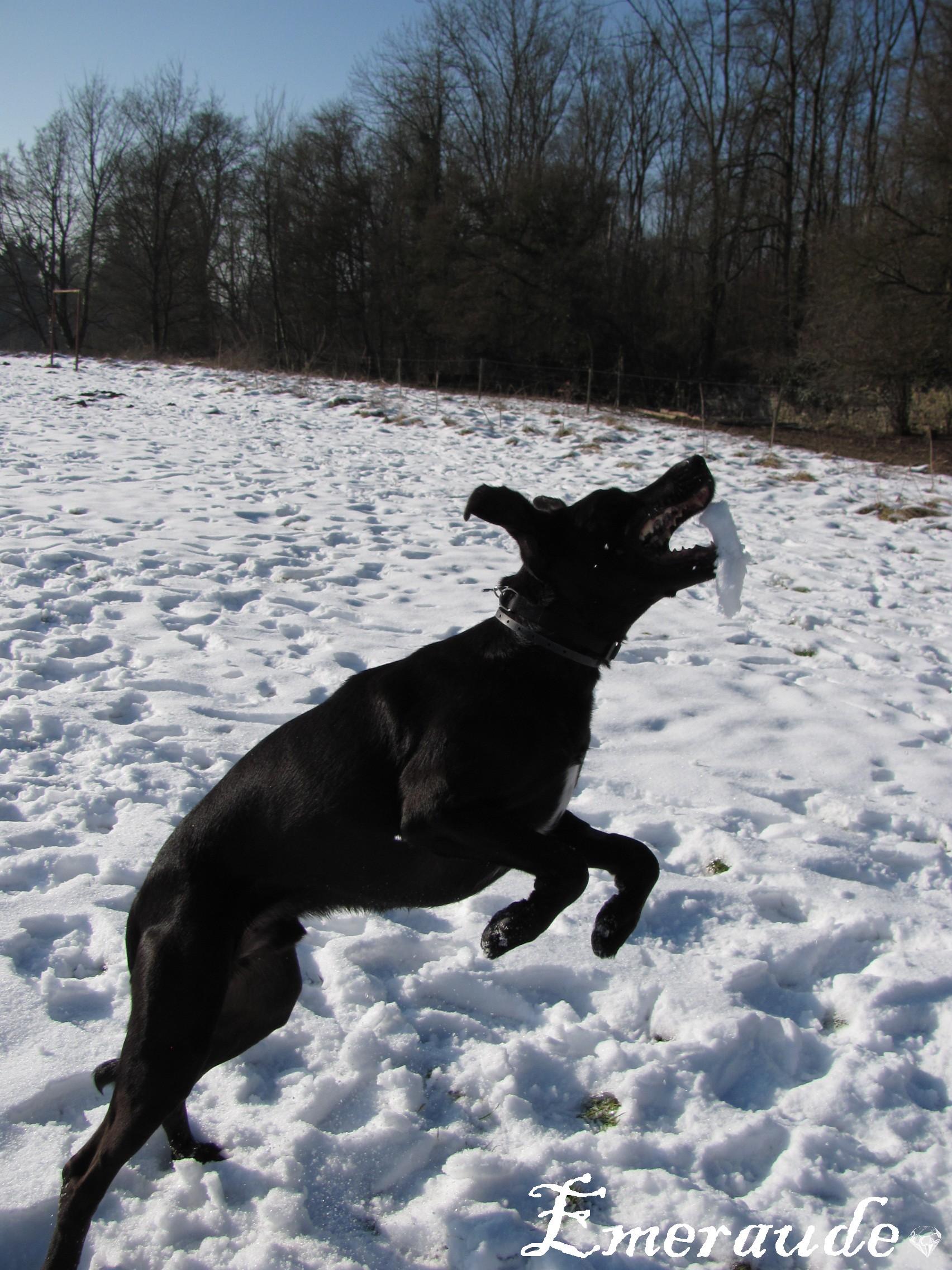 Dixy dans la neige