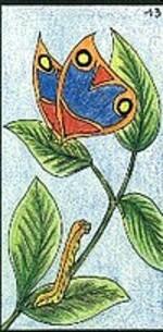 13 - le papillon