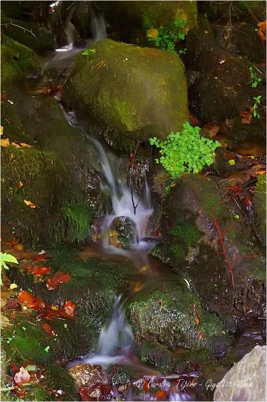 Mini cascade aux Bois Noirs, Loire