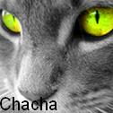 Pour le concours de Chacha