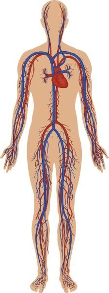 Info Tension artérielle basse