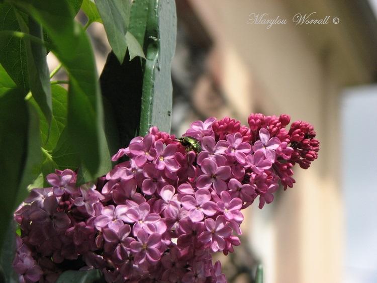 J'aime les fleurs