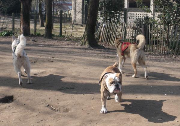 Jemma et Juli au parc à chiens