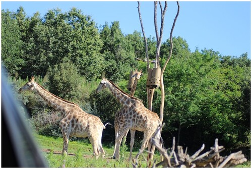 La partie safari en voiture