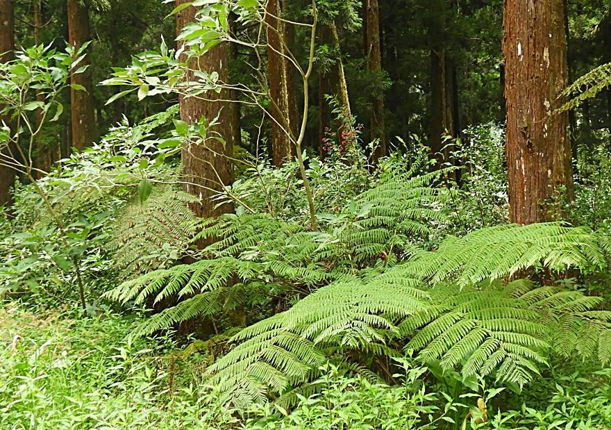 8/8/19 : Forêt de Bébour (Réunion) 2/5 -