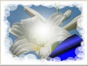 fleur-lys-etricourt-somme-peronne-5551688.jpg