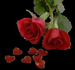 ♥ La dernière rose ♥
