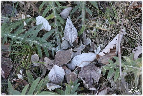 communaute-Tataray-7154-feuilles.jpg