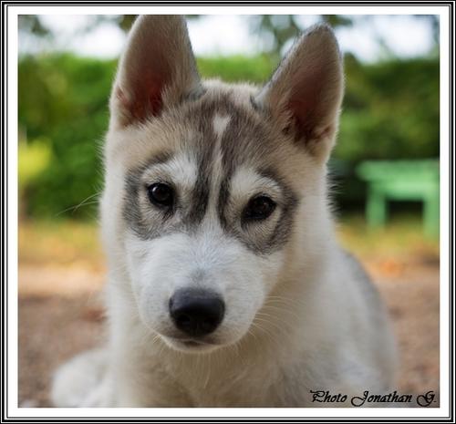 Jaïko (3 mois)