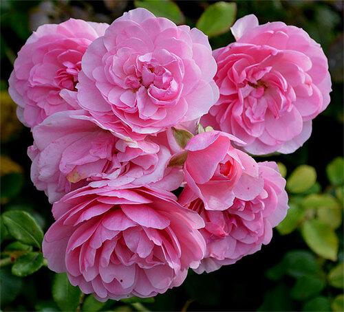 Jardin encore fleuri.