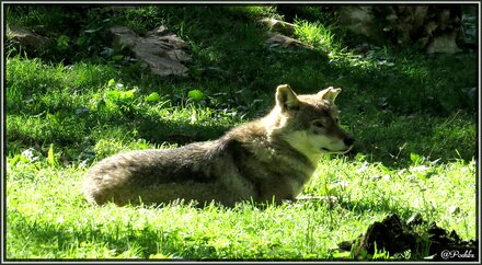 Han-sur-Lesse : le parc animalier