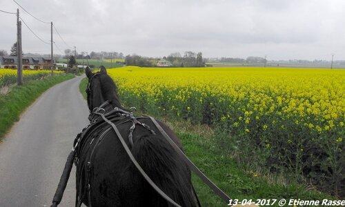 13 Avril: Nariolo enfin bien a son aise entre les brancards!