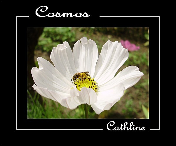 COSMOS--TOUT-SIMPLEMENT.jpg
