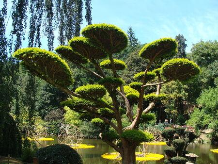 Jardin_oriental_de_Maulevrier_49__104_