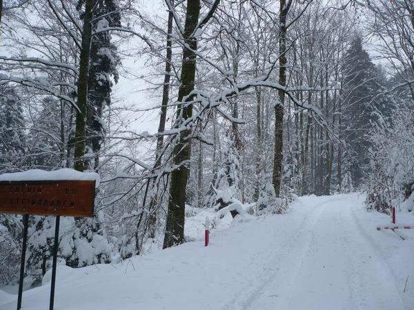 Vers-Moosch-Chemin-de-Steingraben.jpg