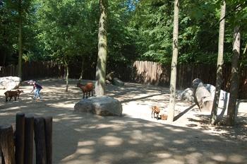Zoo Duisburg 2012 703