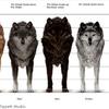 loups de synthèse dans New Moon