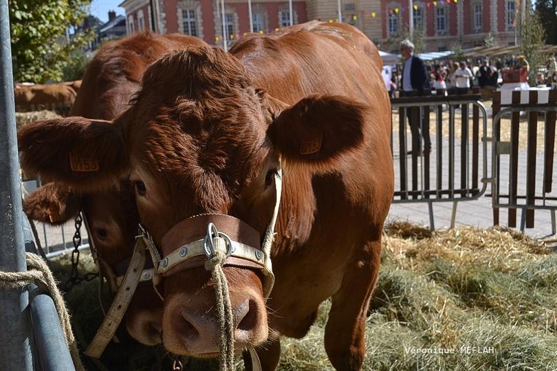 Rambouillet : La Saint Lubin - les 15èmes Comices agricoles : Les éleveurs à l'honneur