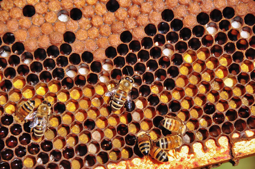 The organisation of a hive