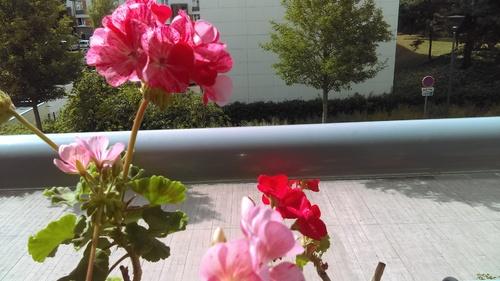 Deux jours de pluie et les fleurs revivent