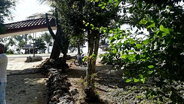 Jour 11 Playa Larga / Palpite / La Havane