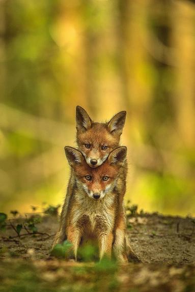 Un grand photographe de la nature ...