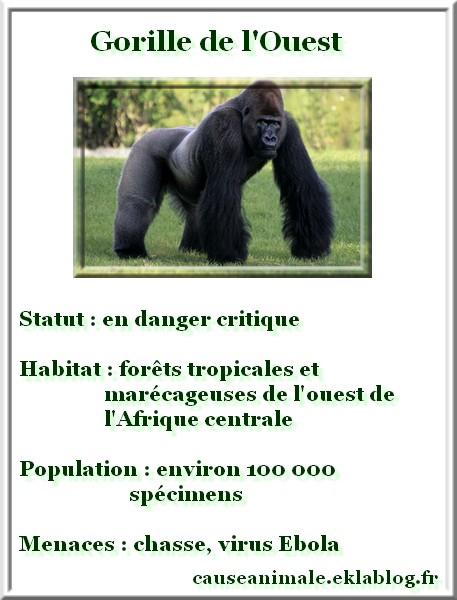 Biodiversité : Dix espèces à sauver