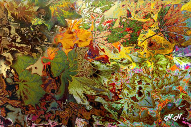 Au bal des feuilles