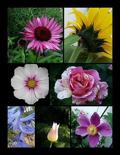Montage-fleurs--10-08-11.png