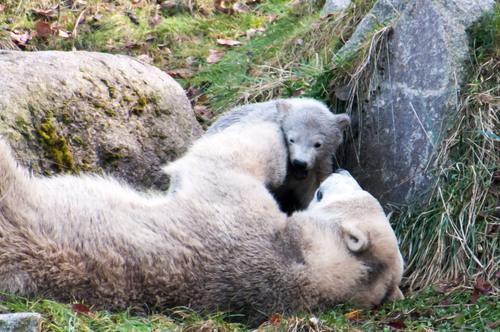 naissance au zoo de Mulhouse