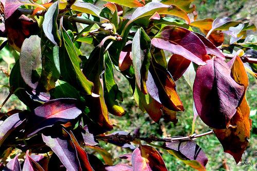 Des feuilles aux couleurs de l'automne