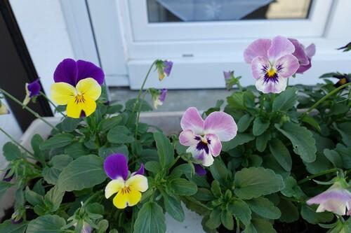 De jolies fleurs...