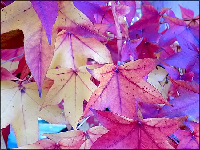 Plein feu sur l'automne (2)