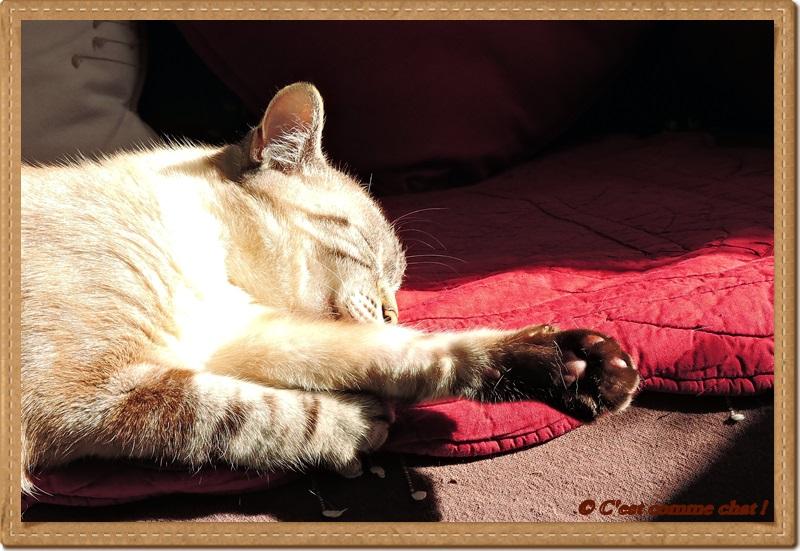 Equilibre sur canapé ... ensoleillé !
