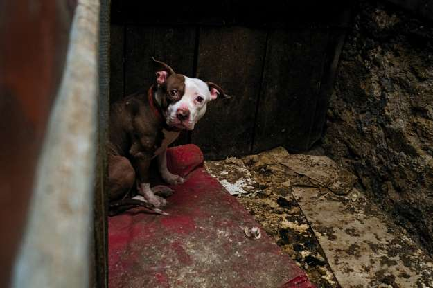 Trafic de chiens : halte au supplice