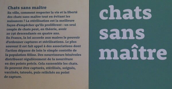 "Exposition ""Chiens et chats""  (2/2)"