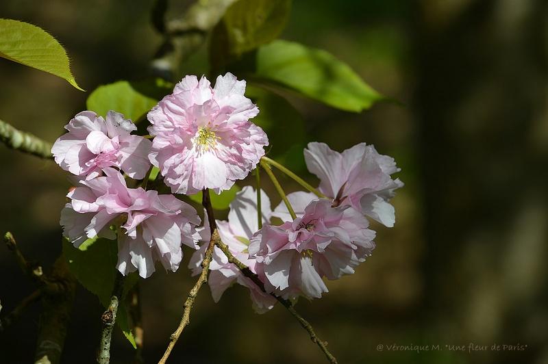 Rambouillet : Dès que le printemps revient ...