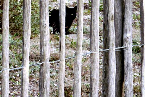 Le chat noir caché !