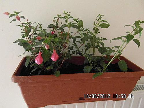 mes-fleurs-006.JPG
