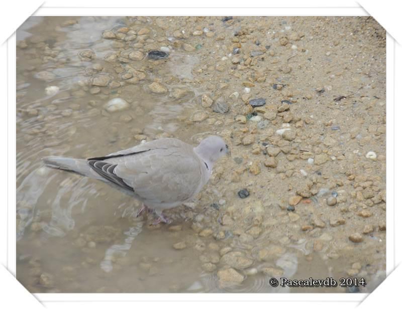 """Les oiseaux de """"mon"""" chemin - 4/9"""