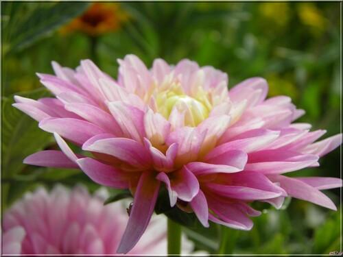 Fleurs d 'été