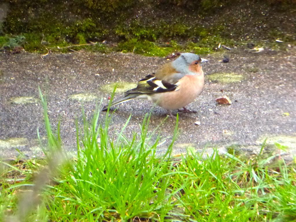 Oiseaux dans notre jardin!