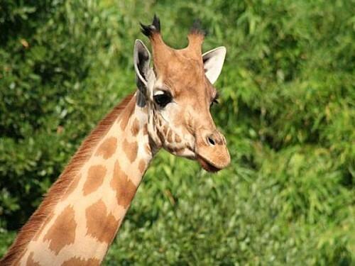 safaritrois-thumb-940x705-1697-600x450