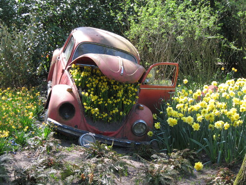 #amsterdam #tulips