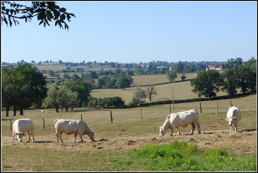 Balade dans la campagne charolaise