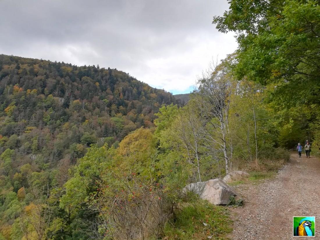 Les  Vosges : Vallée de la Wormsa 1/2